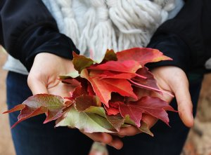 Fall Hand Care Basics